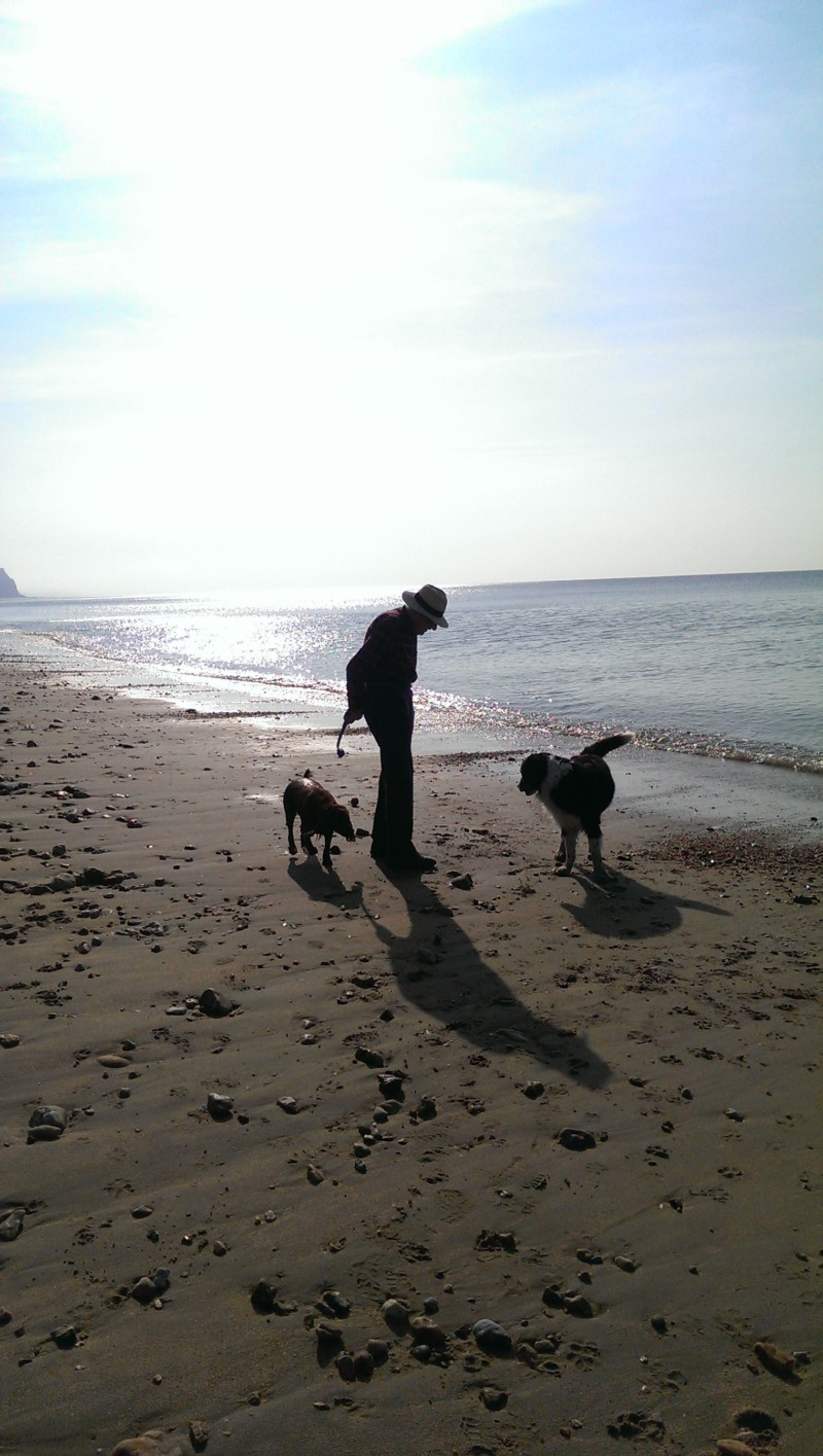 Take a Pet Friendly Break by the Beach