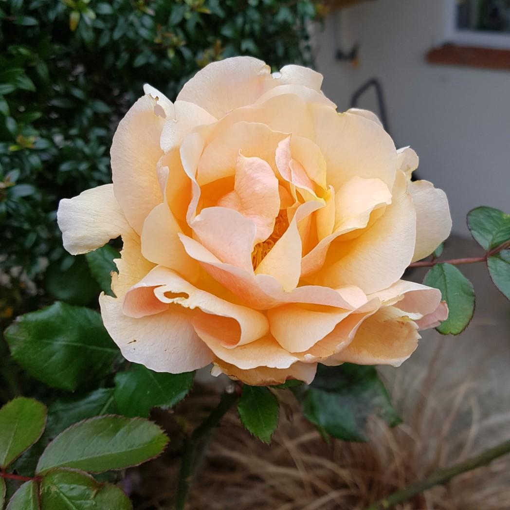 Eype in Bloom