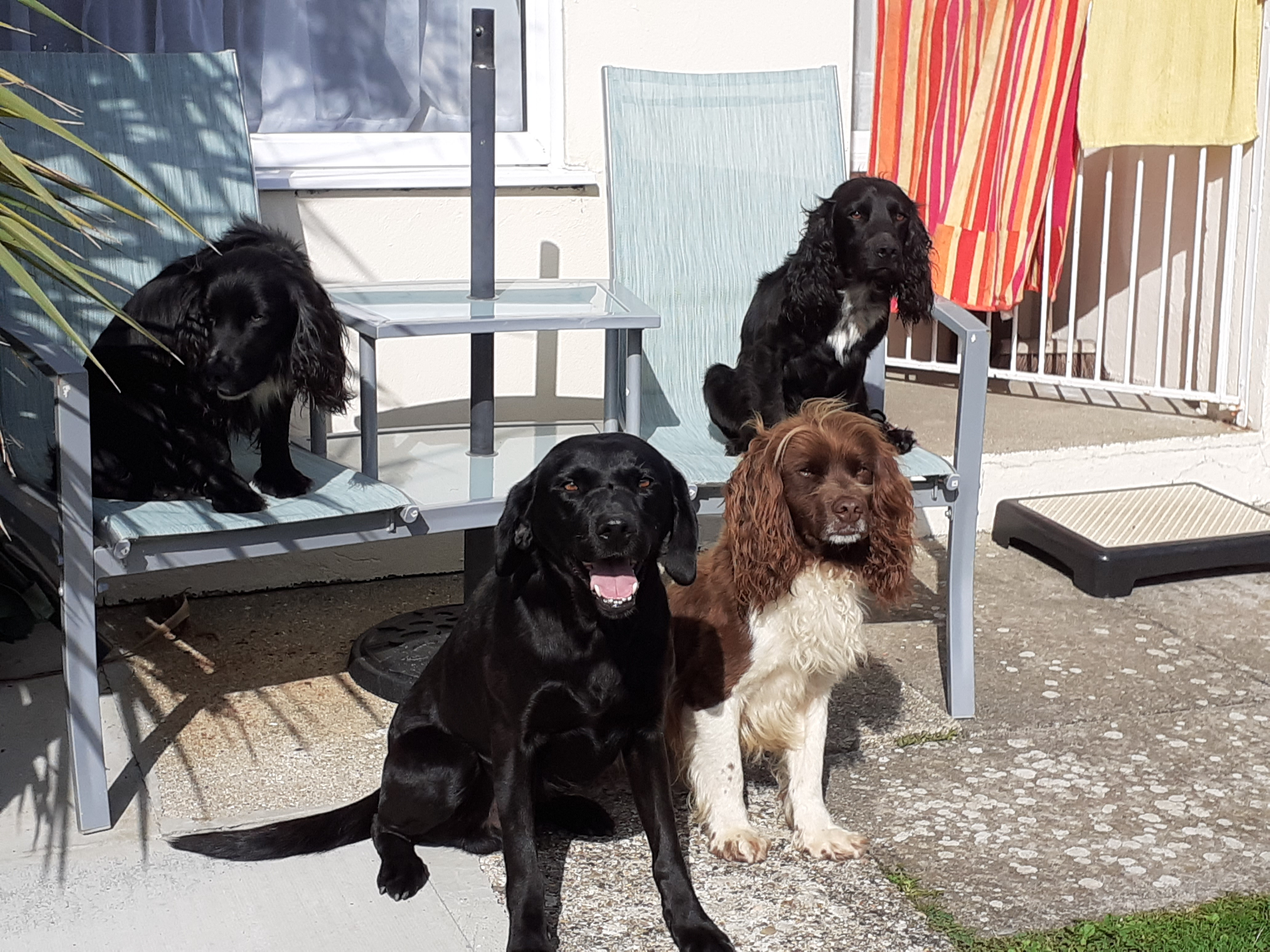 Dog Friendly Staycation Photo Competition Winners!